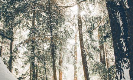 Von drauss vom Walde da kommt ein FinTech daher….
