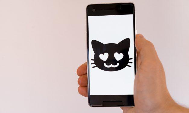Cat oder DOG Content – Inhalt der begeistert?