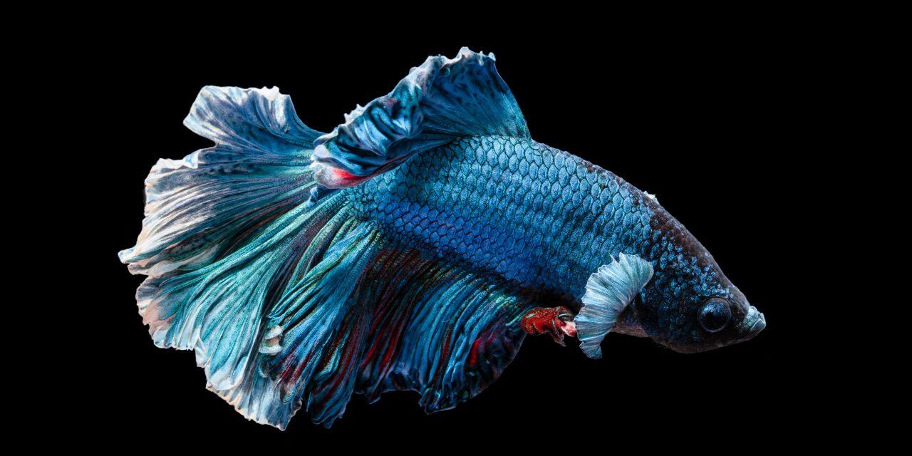 Fish Content – Damit kommen Sie nicht ins Schwimmen