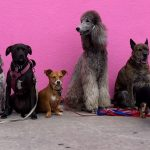 Dog content and the future of mobilty